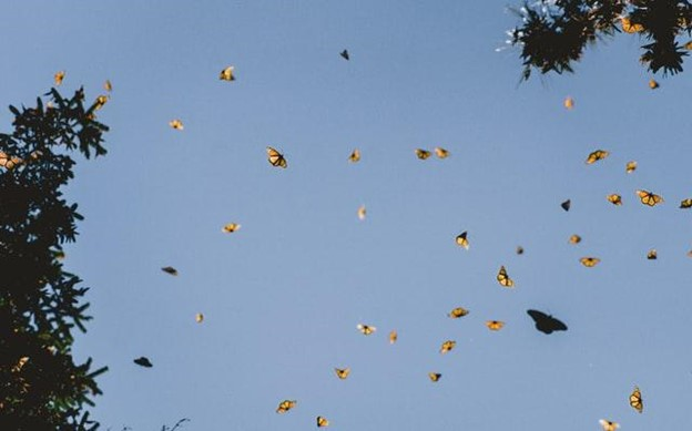 Tribute To The Monarch Butterfly